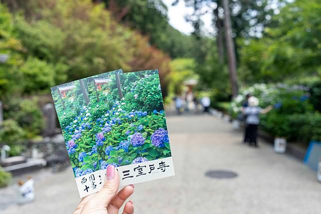 初夏時門票也是印著繡球花。