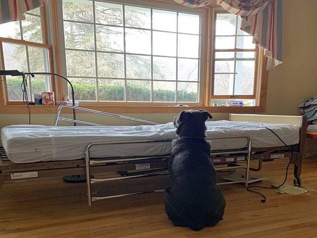 狗狗在病床旁等待逝去的主人回來 忠誠模樣讓人好揪心!