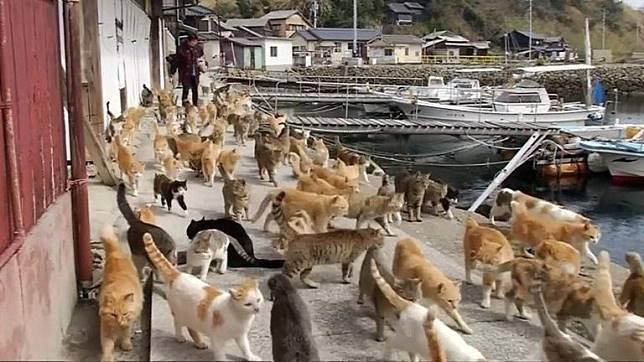 Kucing-kucing di Pulau Okishima