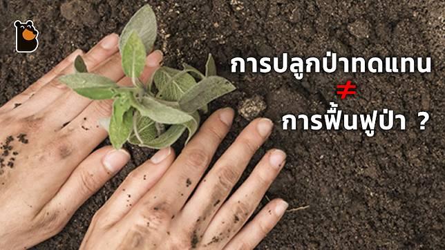 การปลูกป่าทดแทนไม่ใช่การฟื้นฟูผืนป่า แต่เป็นการทำลายระบบนิเวศโดยไม่รู้ตัว!?