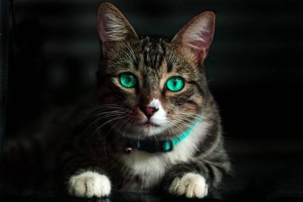 Beberapa Fakta Menarik Dibalik Mitos Kucing Punya 9 Nyawa