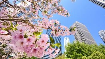 錯過等一年 | 日本櫻花季邀您共赴一場春天的花の限定