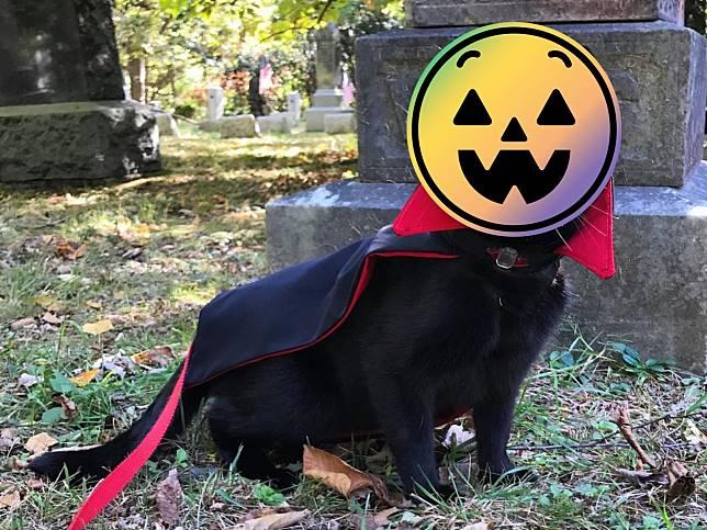 女子救援小貓 幾個月後竟長成「可愛吸血鬼」:你的血朕要了!