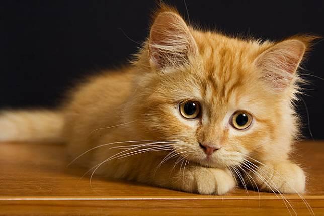 Cara Merawat Kucing Jamuran Jaga Peliharaan Anda Dari Kerontokan Merdeka Com Line Today