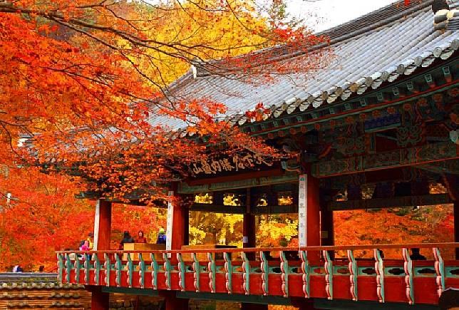 每逢秋天內藏山楓林染紅,風景極美,是韓國著名賞楓勝地。(互聯網)