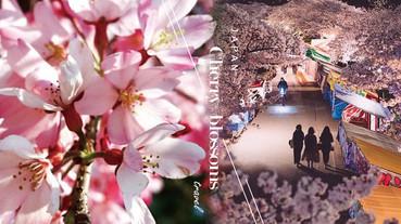 2020日本櫻花最新預測出爐!精選五大賞櫻勝地,絕美櫻吹雪、花筏絕對是人生必看美景!