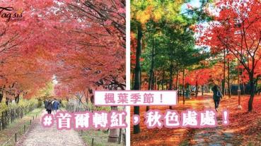 又到了浪漫的楓葉季節~首爾市區楓葉轉紅,秋色處處!立即起行楓葉之旅~