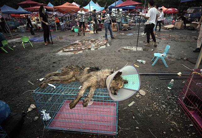 The ritual slaughter of 100,000 animals at China's Yulin Dog Meat Festival is abhorrent, cruel, and must be stopped forever