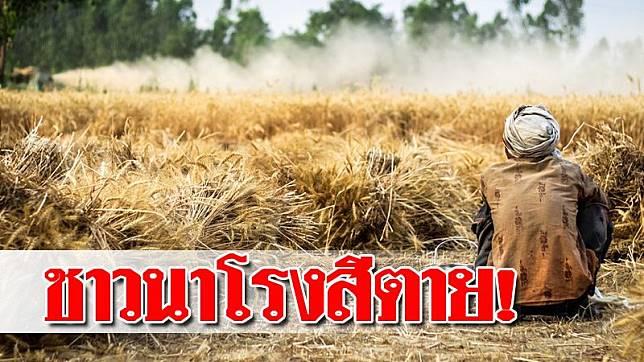 เตือนอุตสาหกรรมข้าวไทย