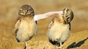 經 PS 過後的「鳥人」 居然連胸部都可以這麼擬人化...