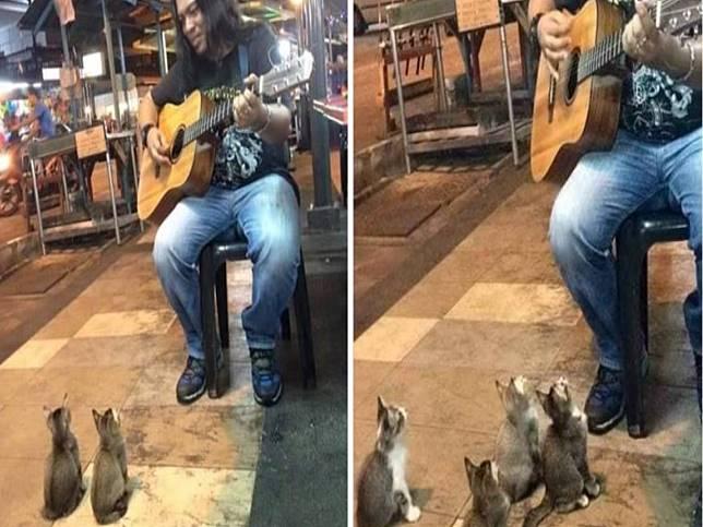 街頭藝人彈吉他唱歌無人問津 竟引來四隻小貓變忠實聽眾!