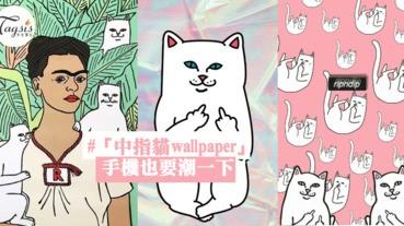 賤賤潮貓惹人愛~精選13張「中指貓wallpaper」手機也要潮一下!快換桌布吧~