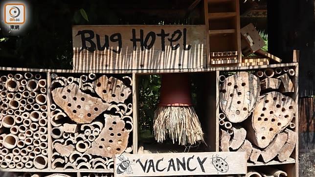 竹蜂的巢,其實是農場用竹答特製的「Bug Hotel」。(劉達衡攝)
