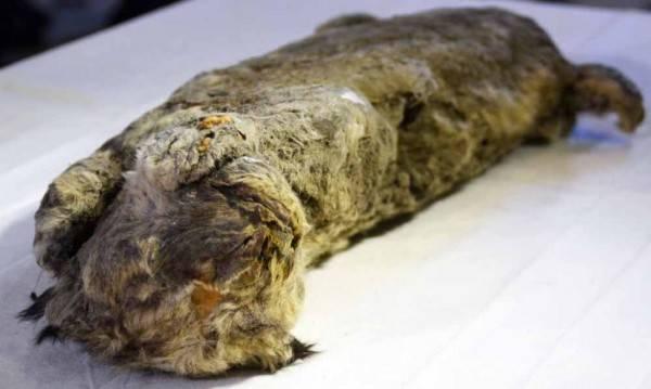 Beku Berabad-abad, 7 Hewan Purba Ini Ditemukan di Dalam Es