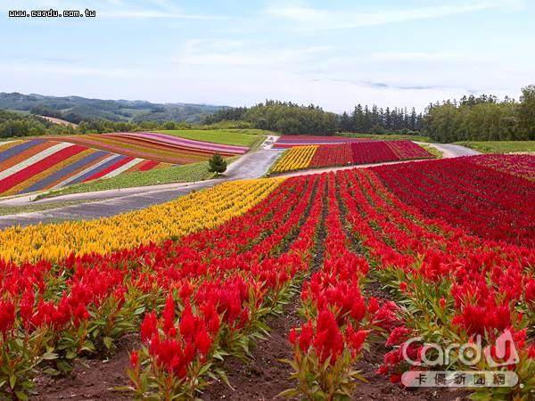 擁有豐富自然景觀和海鮮美食的北海道,是台灣及日本大學生畢業旅行票選的第一名(圖/Club Med 提供)