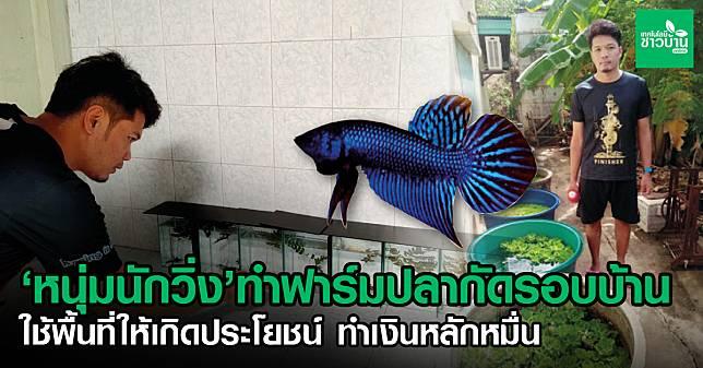 10 ปลากัด