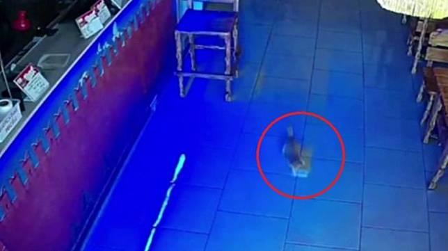 Video anak kucing tertangkap basah saat coba menyelinap dengan segepok uang dimulutnya menjadi viral. [tangkapan layar/Instagram: @PIVBAR_CCCP]