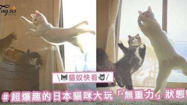 又再攻陷貓奴們的心!貓貓都識得跳芭蕾舞?!超爆趣的日本貓咪大玩「無重力」狀態