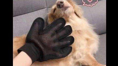 【小三美日】★與毛小孩的新樂趣★神奇寵物按摩除毛梳理手套