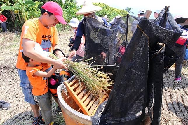 參加台北的北投割稻趣體驗活動,大小朋友都可來親試收割等農務。(互聯網)