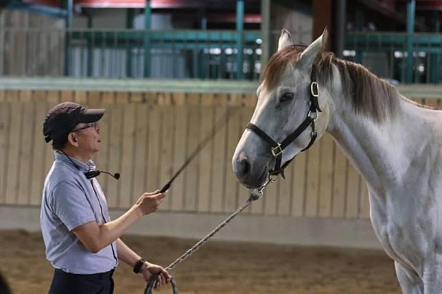 神馬郡休閒農場提供領馬練習、餵食、刷馬、備馬及洗馬等體驗。(互聯網)