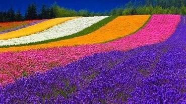 【旅遊】絕美花景!精選北海道6大景點