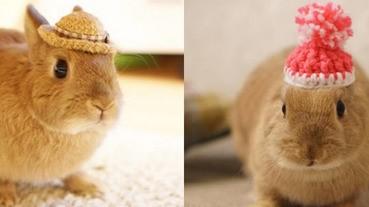 天生帽子控!萌兔可以不穿衣服,但就是不可以沒有帽子戴~