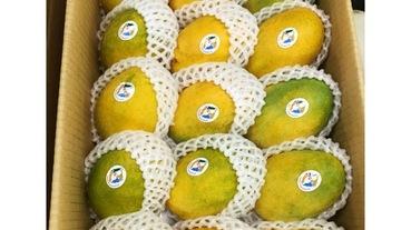 不只愛文芒果!夏日必吃水果還有高營養價值的土芒果!哪裡買、保存方法都超簡單