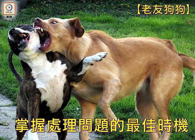 狗狗不會平白無故胡亂攻擊,不少咬人事件往往是狗家長逼出來的。(設計圖片)