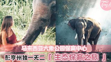彭亨州秘境景点!与大象零距离互动~快和姐妹们安排一日野生动物亲近之旅吧!
