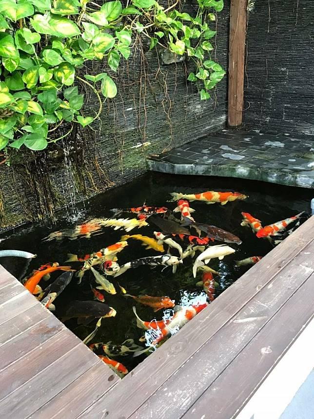 Inspirasi Kolam Ikan Di Halaman Rumah Ngademin Banget Yukepo Com Line Today
