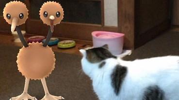 抓 Pokémon 的指路明燈,竟然是你的寵物?!