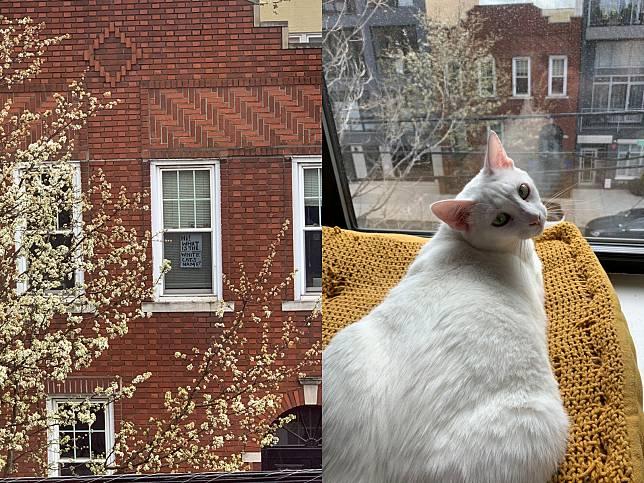 好想認識你!女子居家防疫中搭訕對面白貓鄰居 竟牽起意外緣分