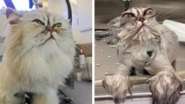 【萌寵特輯】小狗小貓下水洗澡前後對照 原本可愛的寵物跑哪去了!!