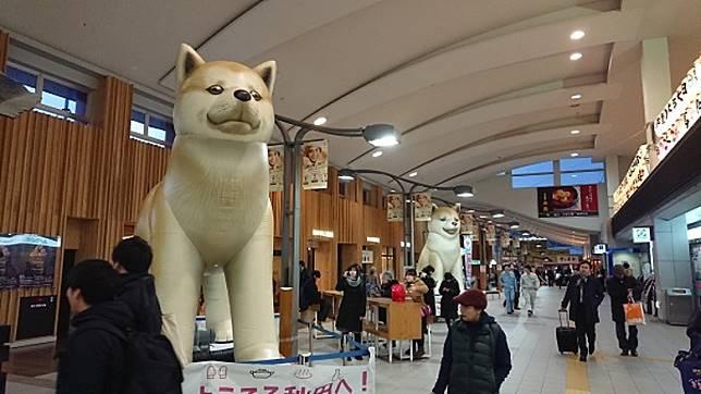 除了吹氣秋田犬外,去年秋田站亦豎立了兩尊巨型秋天犬像。(互聯網)