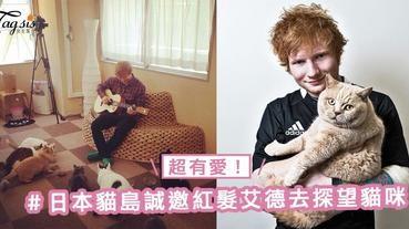 超有愛!日本貓島誠邀紅髮艾德去探望貓咪~只因他又愛日本又愛貓!