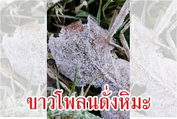 หนาวฟินติดลบ 3 วันซ้อน เหมยขาบขาวโพลนดั่งหิมะ บนดอยอินทนนท์