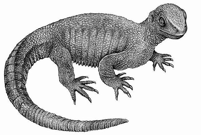 Nenek moyang kura-kura dan kanker tulang tertua