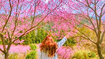 不用去日本也能跟櫻花拍美照!盤點全台 6 大絕美的賞櫻勝地