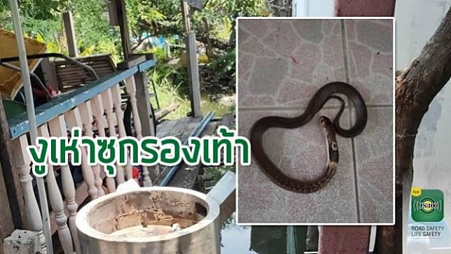 ลูกงูเห่าหลุดจากรองเท้าแตะหลาน ป้าคว้าไม้ตีซ้ำจนงูตาย ตกใจหนักเห็นแม่งูเลื้อยผ่านเพ่นพ่านก่อนหน้านี้
