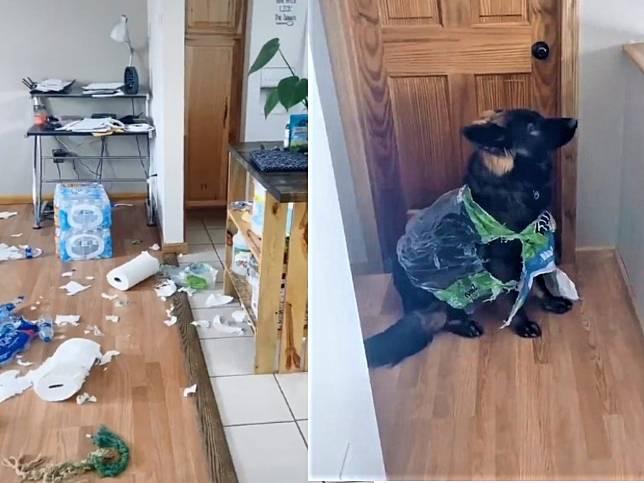 女子回家衛生紙碎滿地以為被竊 轉頭秒逮犯人:笨汪你穿啥?