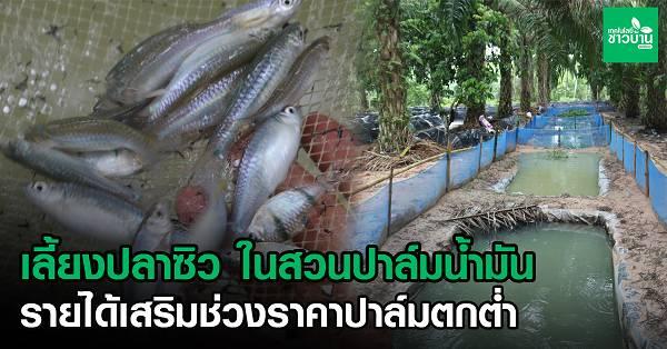 13 ปลา