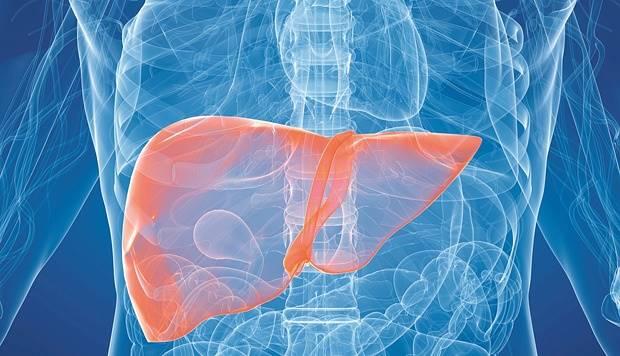 Gambar organ hati di dalam tubuh manusia