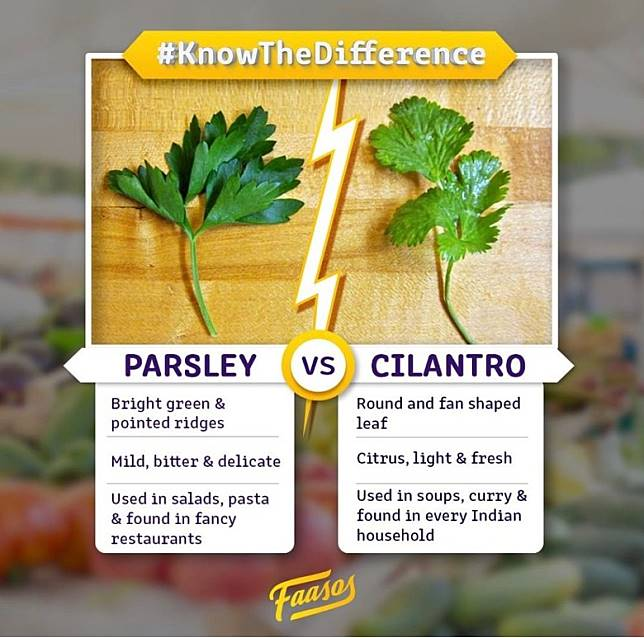 Parsley及Cilantro是煮西餐時最易混淆的新鮮香草。(互聯網)