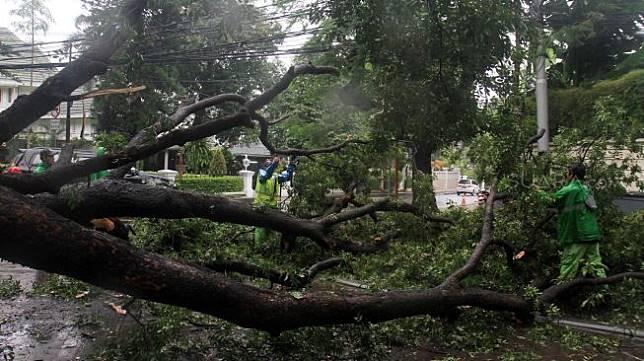 Petugas memotong pohon roboh di depan rumah dinas Gubernur DKI Jakarta Anies Baswedan Jalan Taman Suropati, Jakarta, Selasa (25/2). [Suara.com/Oke Atmaja]