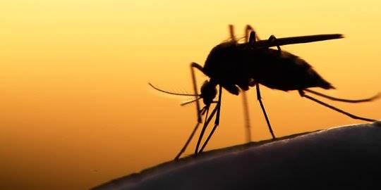 7 Alasan Mengapa Kamu Lebih Mudah Digigit Nyamuk Dibanding Orang Lain