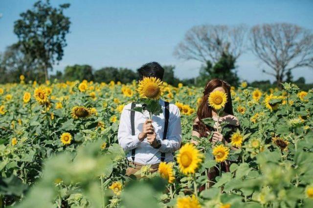 7000+ Gambar Bunga Matahari Untuk Sd HD Gratis
