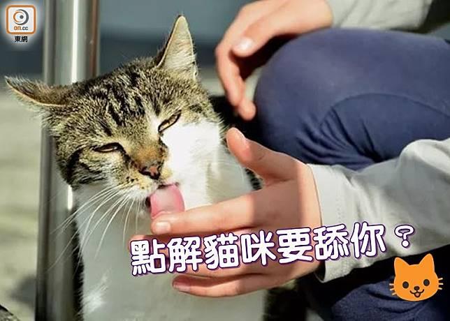 對養貓人來說,每天貓咪不來舔一下,只覺人生沒趣!(設計圖片)