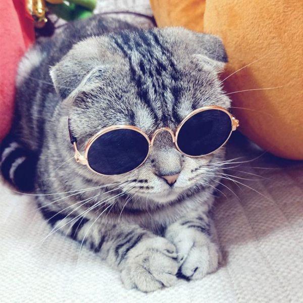 寵物貓眼鏡貓咪墨鏡復古酷貓搞怪拍照道具