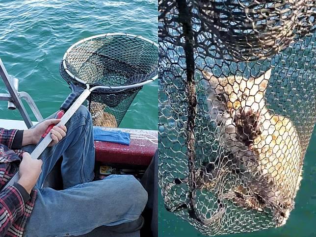 美國一家人到大湖泊釣魚 竟在水中撈到野生短尾貓!